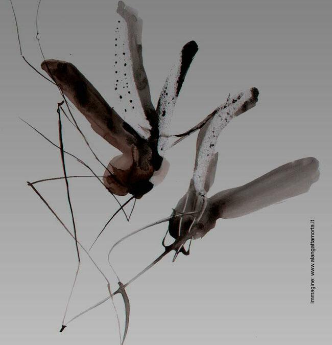 Serenata delle Zanzare 2016
